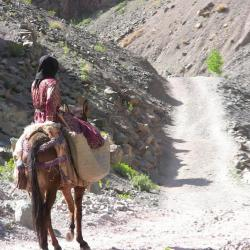 Amazigh
