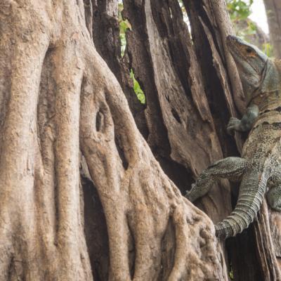 Animaux Costa Rica et Nicaragua   (13)
