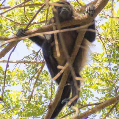 Animaux Costa Rica et Nicaragua   (16)