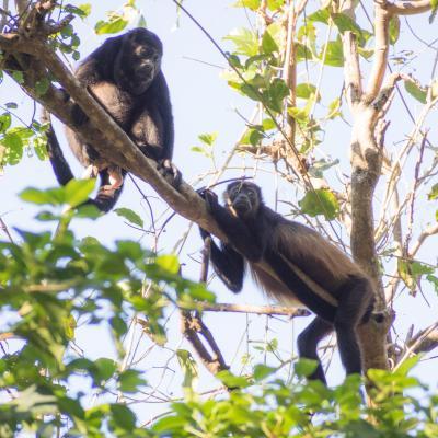 Animaux Costa Rica et Nicaragua   (18)