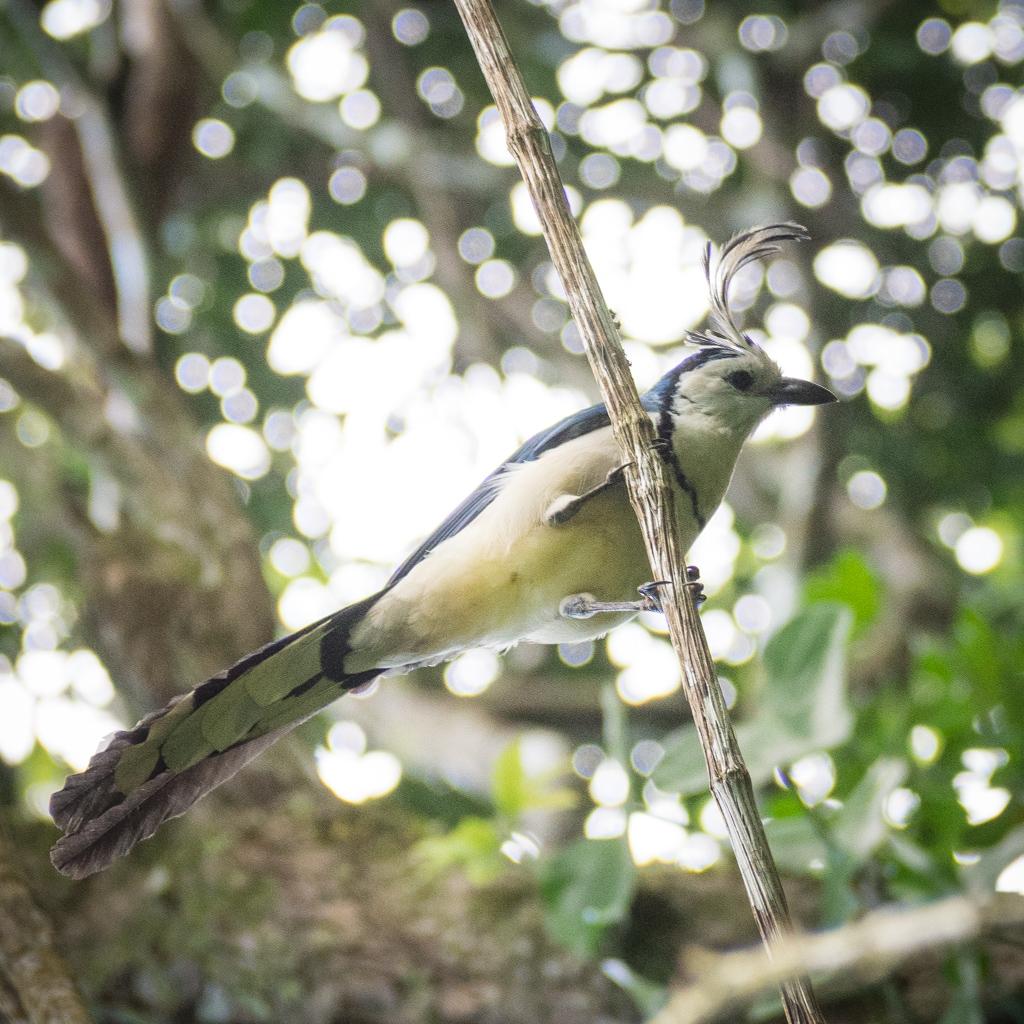 Animaux Costa Rica et Nicaragua   (39)