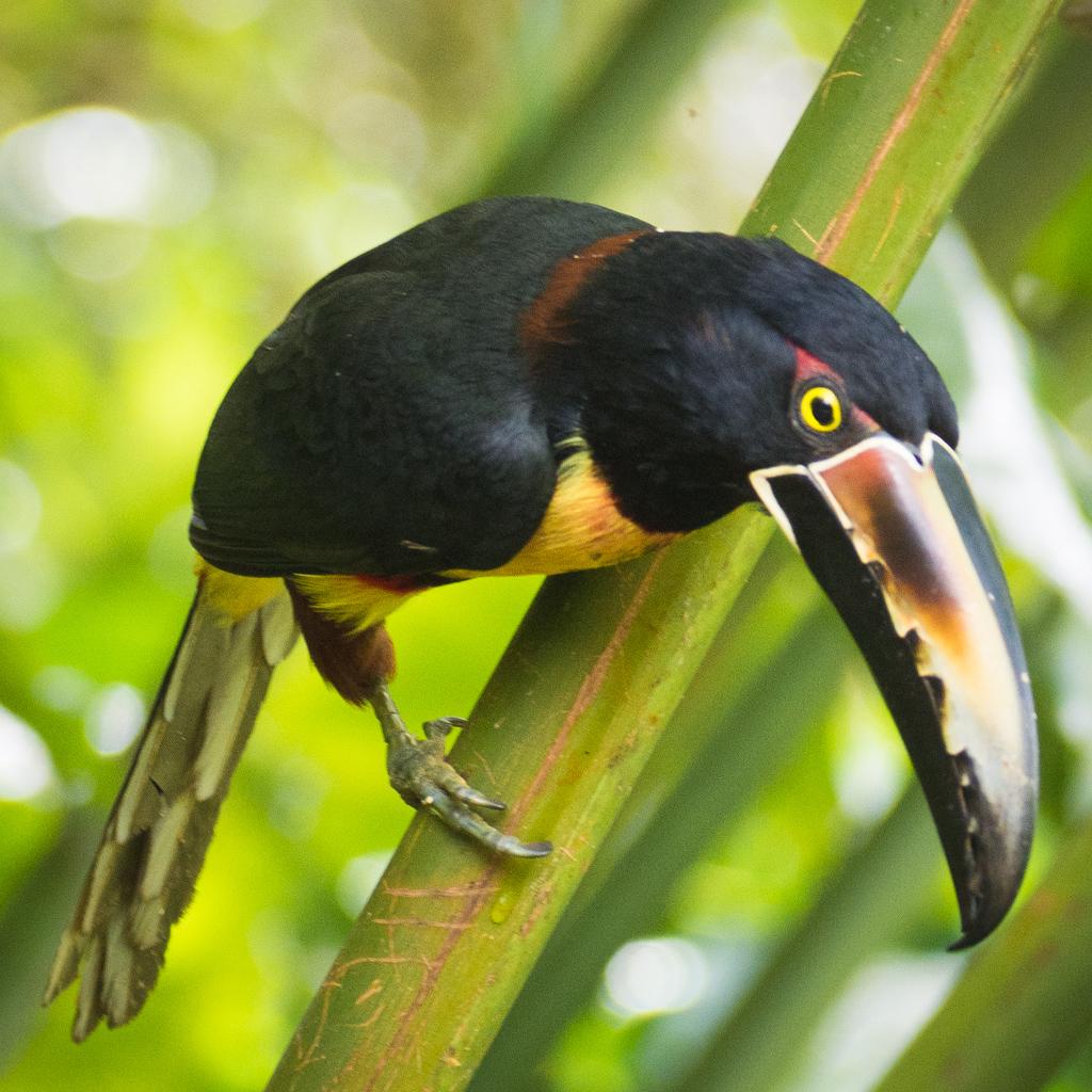 Animaux Costa Rica et Nicaragua   (49)