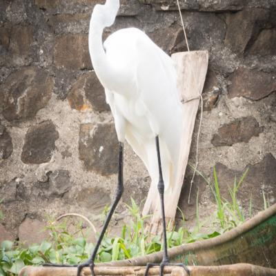 Animaux Costa Rica et Nicaragua   (5)