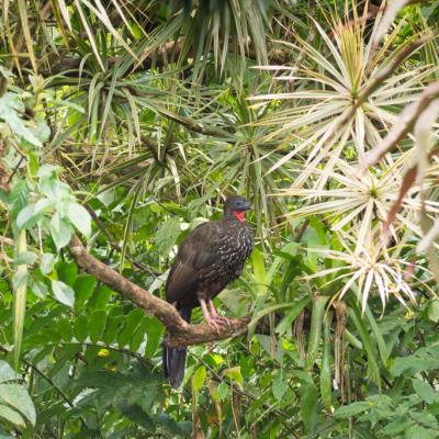 Animaux Costa Rica et Nicaragua   (67)
