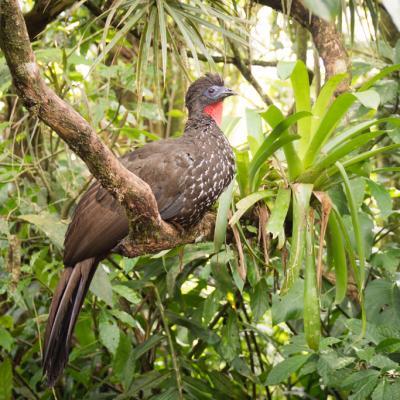 Animaux Costa Rica et Nicaragua   (70)