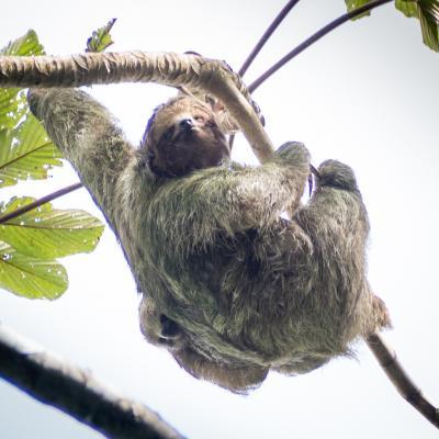 Animaux Costa Rica et Nicaragua   (77)