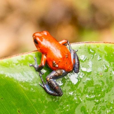 Animaux Costa Rica et Nicaragua   (83)