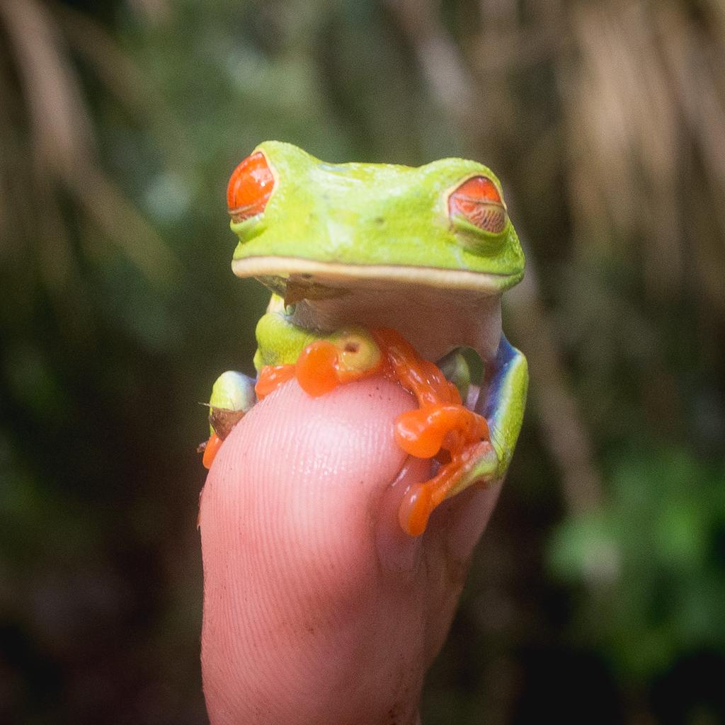 Animaux Costa Rica et Nicaragua   (88)