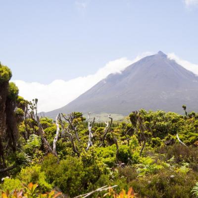 Portfolio Açores