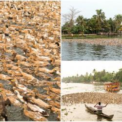 India Kerala collage (3)