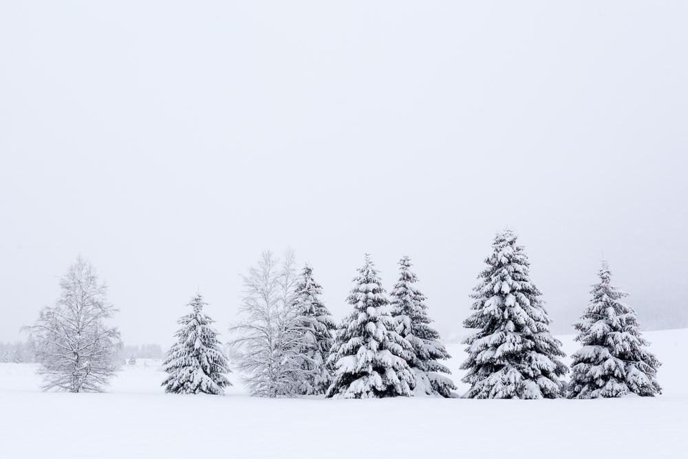 Randonnées hivernales Jura et Vercors