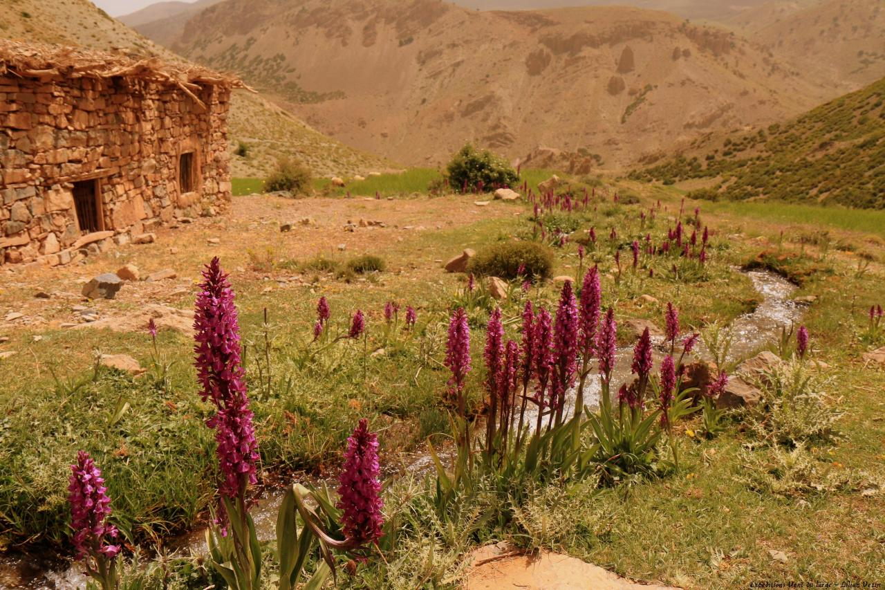 Maroc  (14)