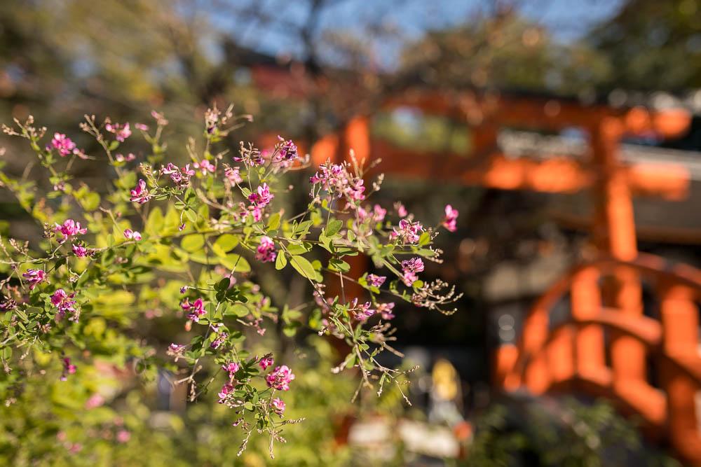 Un automne au Japon (113)