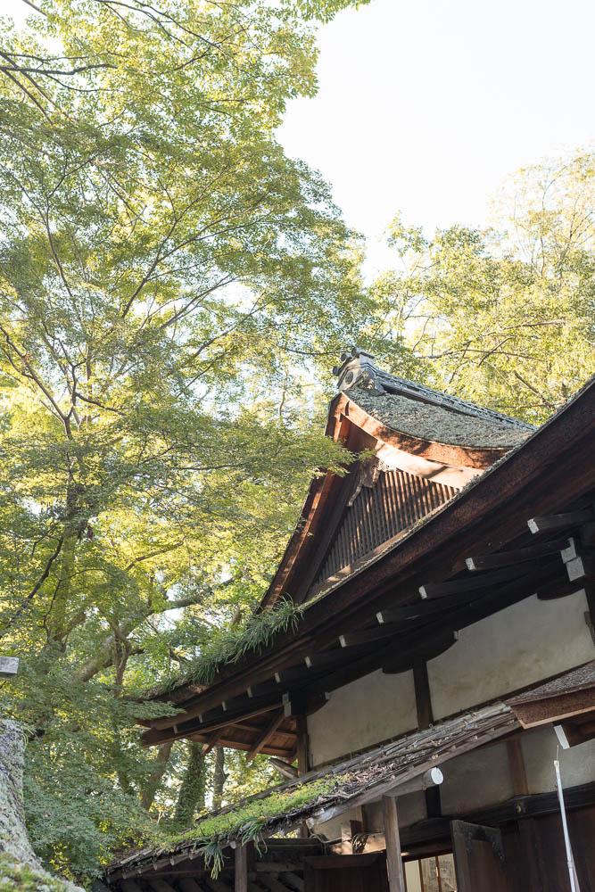 Un automne au Japon (121)