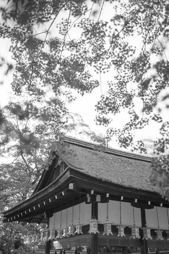 Un automne au Japon (123)