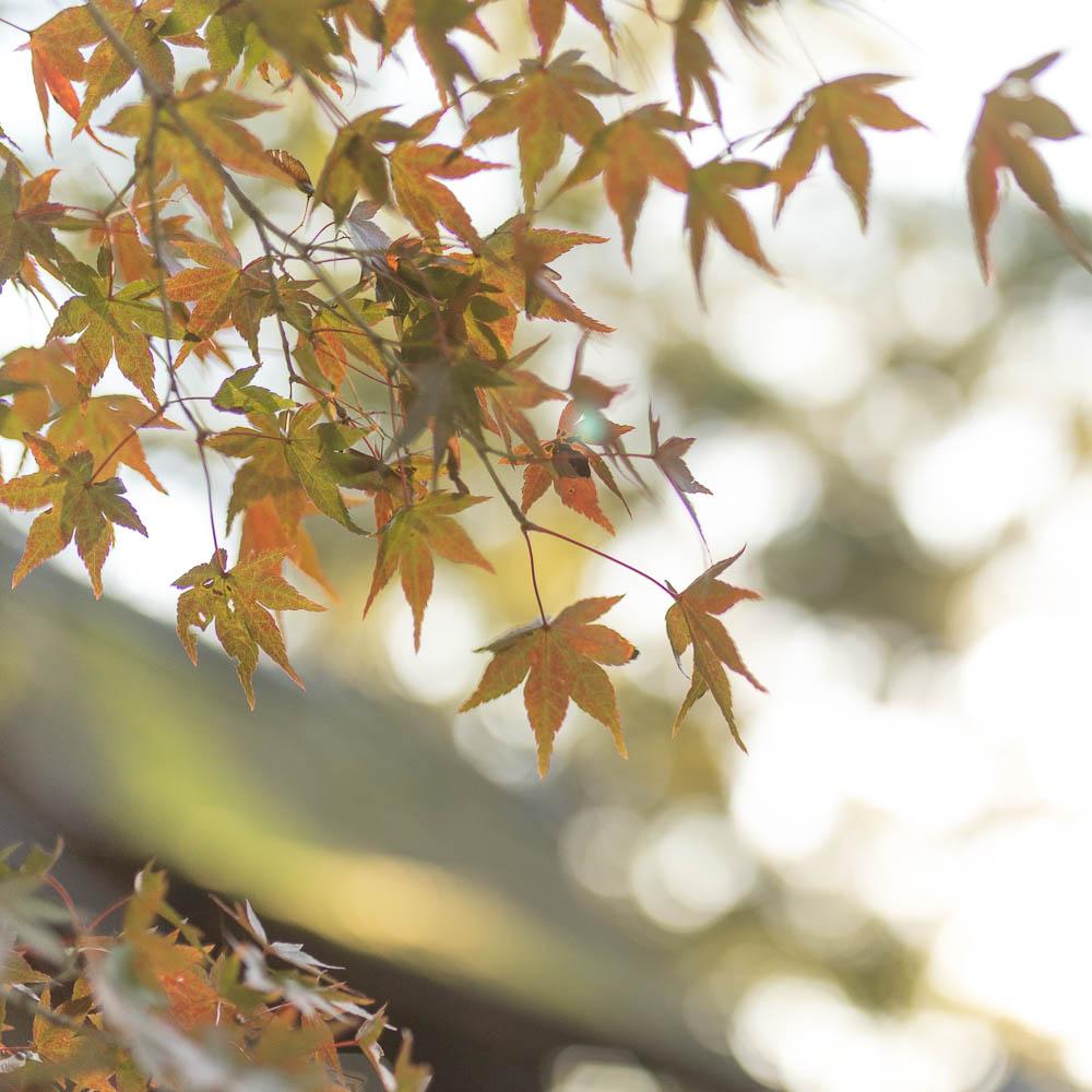 Un automne au Japon (124)