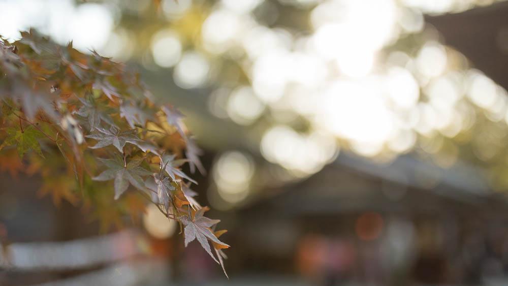 Un automne au Japon (125)