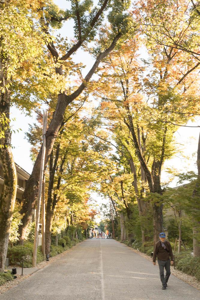 Un automne au Japon (128)