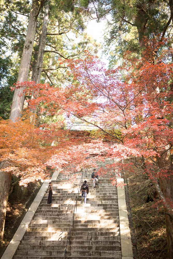 Un automne au Japon (142)