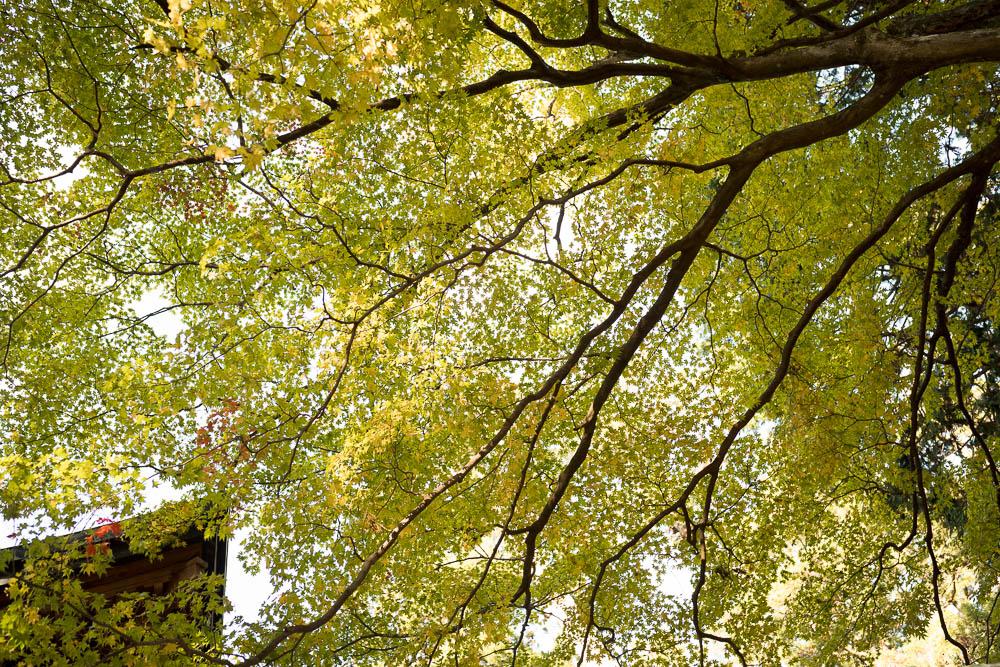 Un automne au Japon (145)
