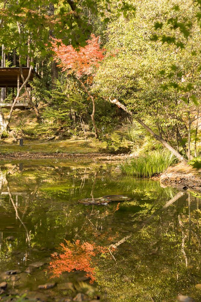 Un automne au Japon (223)