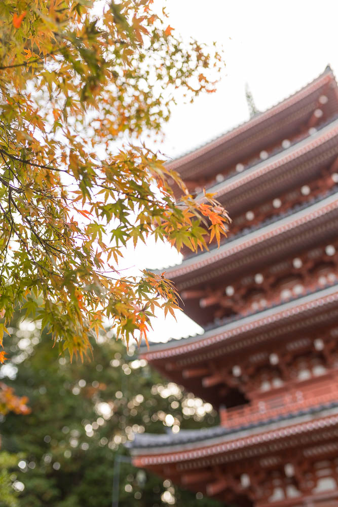 Un automne au Japon (227)