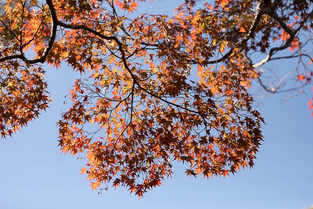 Un automne au Japon (51)