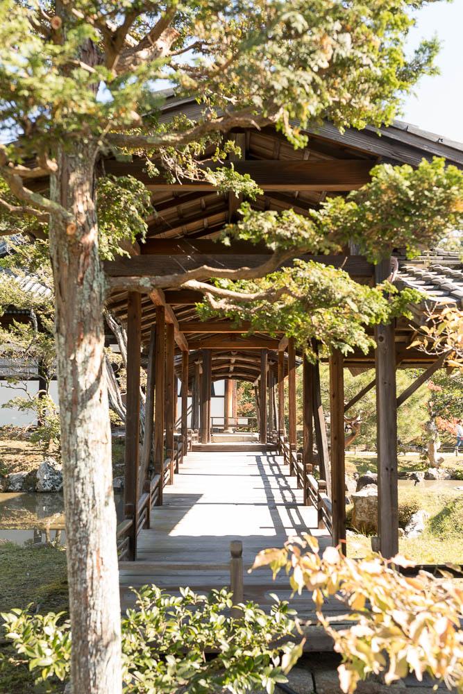 Un automne au Japon (71)