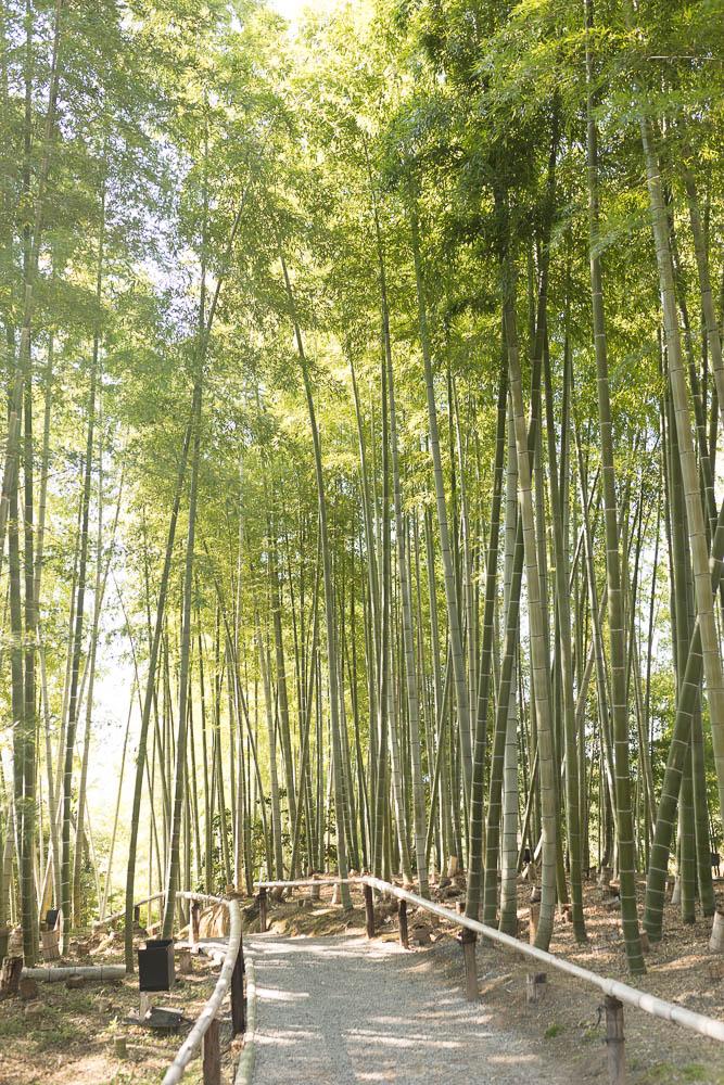 Un automne au Japon (81)