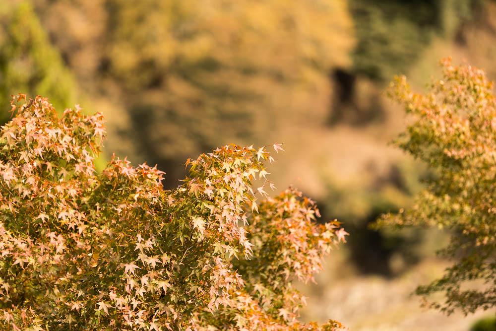 Un automne au Japon (89)