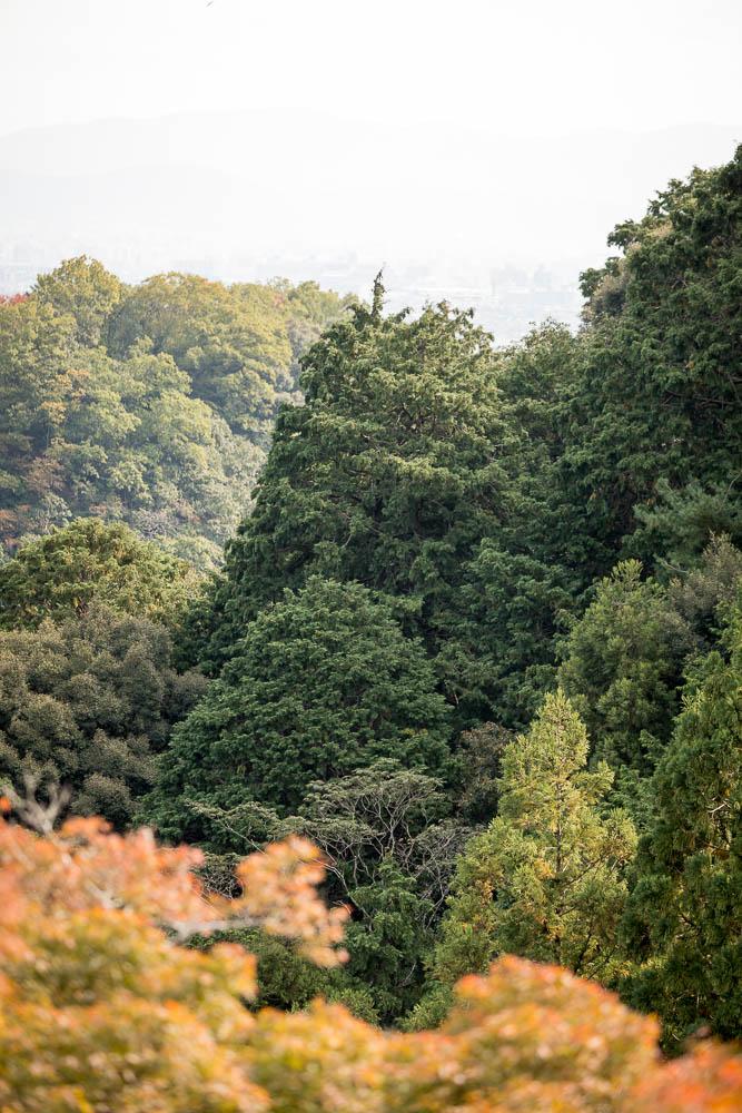 Un automne au Japon (90)