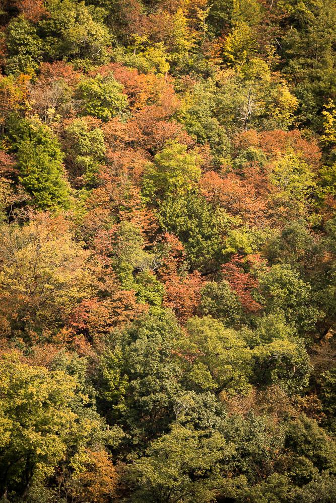 Un automne au Japon (91)