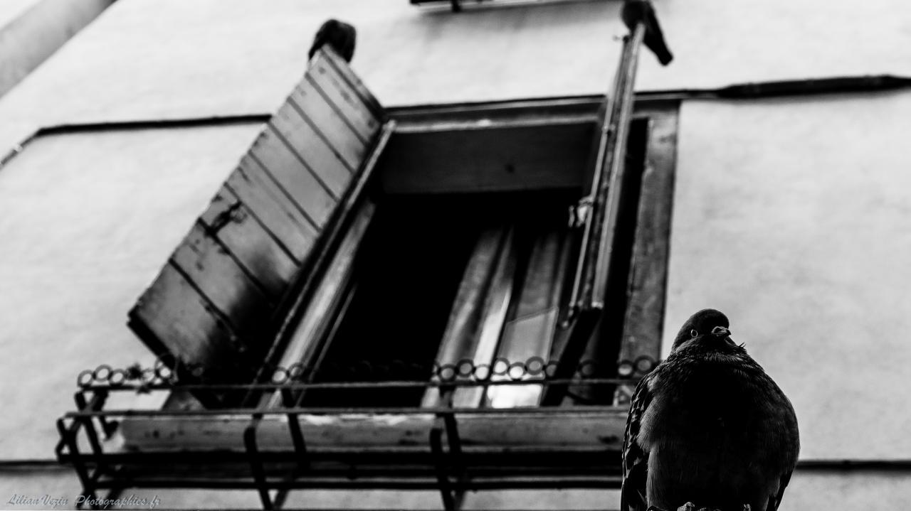 Venise noir et blanc (11)